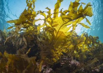 Seaweed Can Bring Prosperity