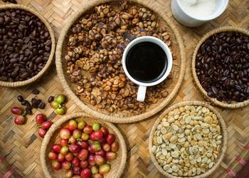 Tortured Brew : The Truth Behind Luwak Coffee