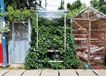 Urban Farming and Green Alley Pilot Program: The Next Big Green for Jakarta