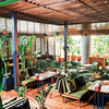 Social Garden: Where Greenery Meets Good Food