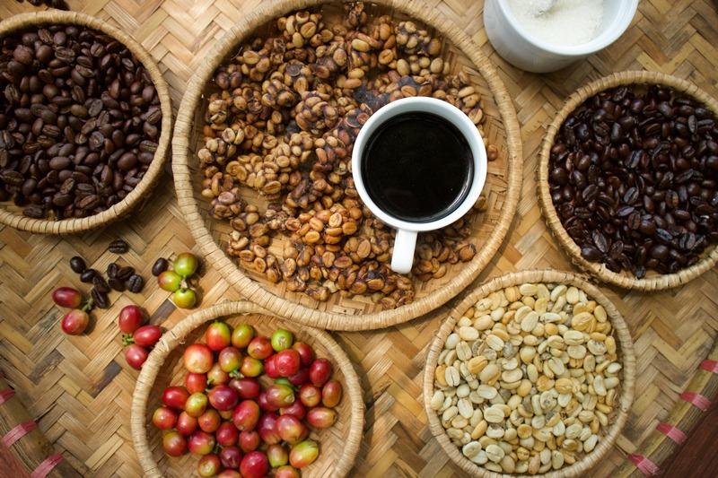 Tortured Brew : The Truth Behind Luwak Coffee   NOW! JAKARTA